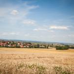 Reife Weizenfelder Ansicht aus Richtung Schmähingen